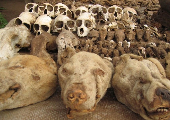 道家阴符派博客--非洲祭品巫术市场--巫术 3