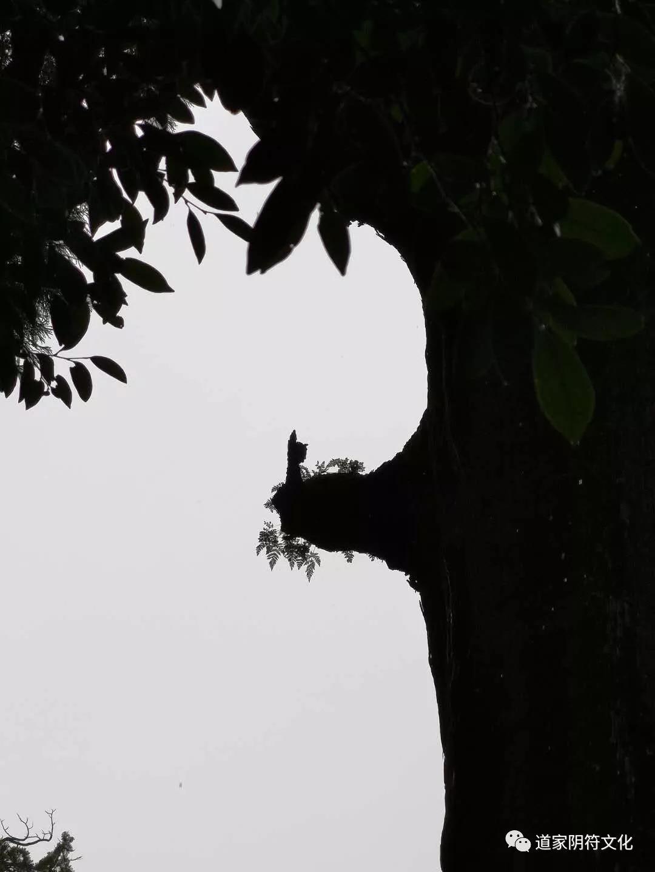 道家阴符派博客--东瀛鹿儿岛(1):雾岛神宫的风水--云游 5